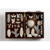Katharine Morling, Nature Box