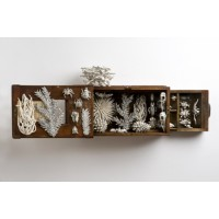 Katharine Morling, Nature Box I